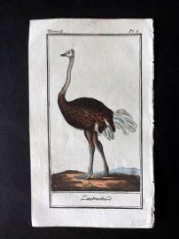 Buffon 1785 Antque Hand Colored Bird Print. Ostrich 2-11